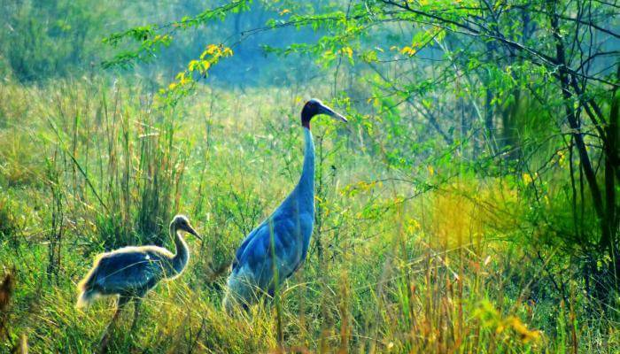 Bharatpur-Bird-Sanctuary_22nd oct