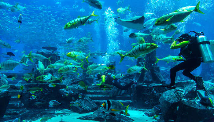 Amazing Scuba Diving In Dubai