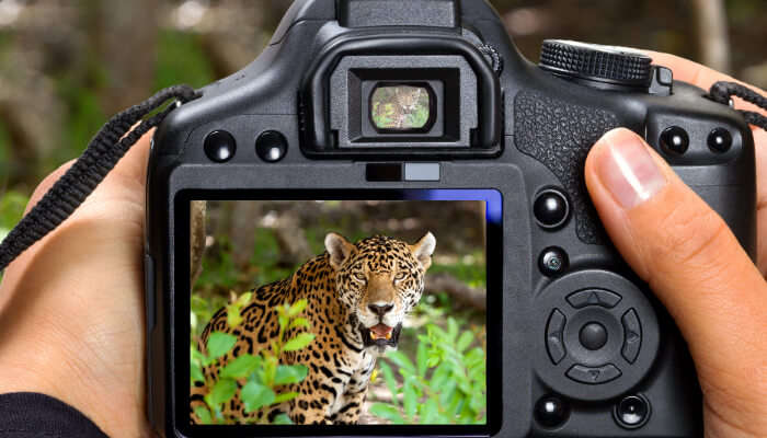 Photography of Animals