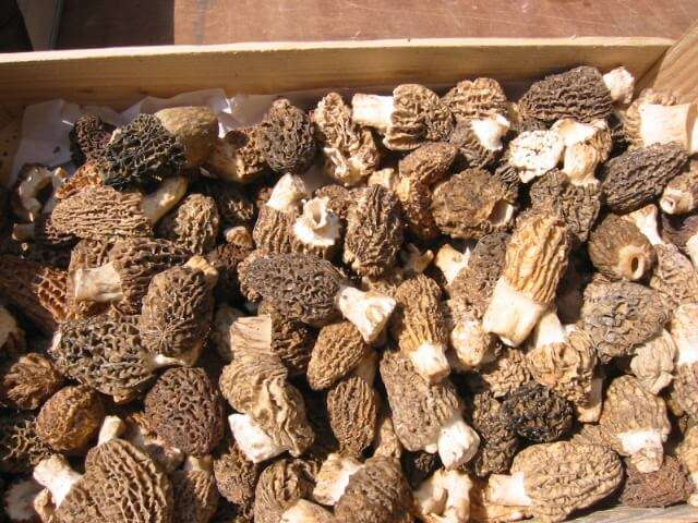Enjoy Local Cuisine like guchhi mushroom in Chakrata