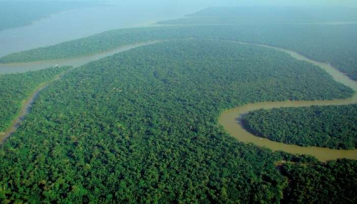 Explore the wild and exotic Amazon rainforests