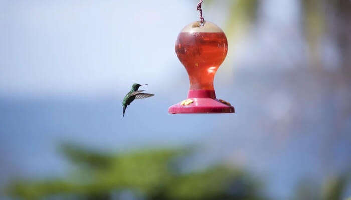 Interact With The Hummingbirds