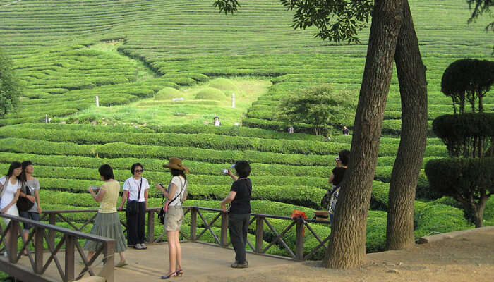 A Tea Garden With Some Tourists
