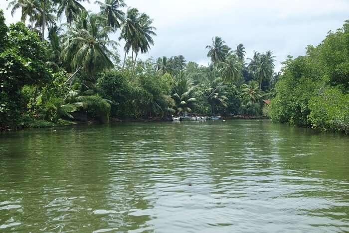 Madu Ganga