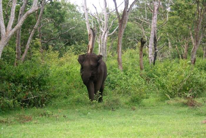 Elephant in a national park