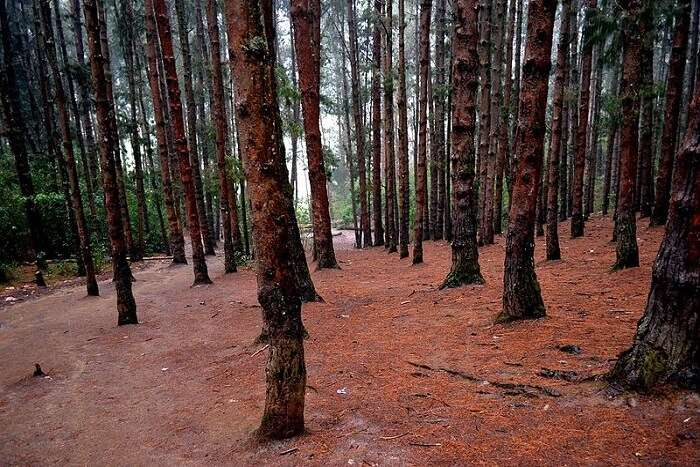 forest in Ooty