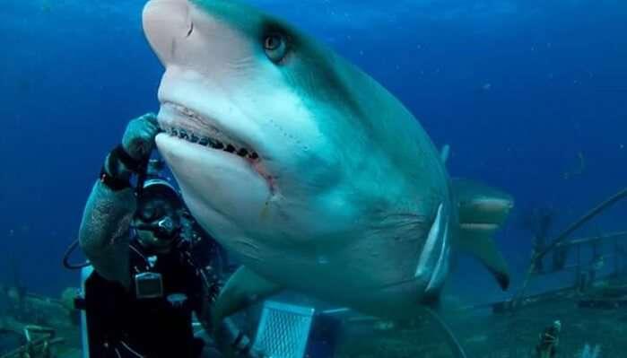 Shark Feeding Encounter