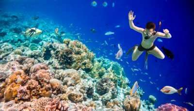 Snorkeling In Maldives cover