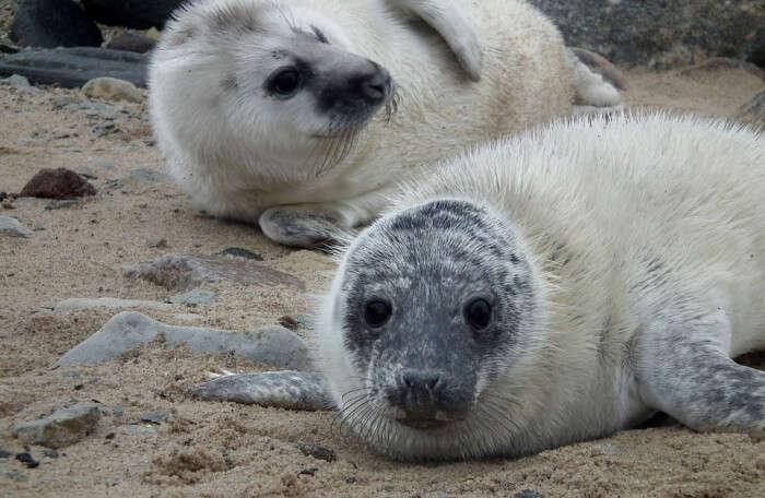 Spot A Seal