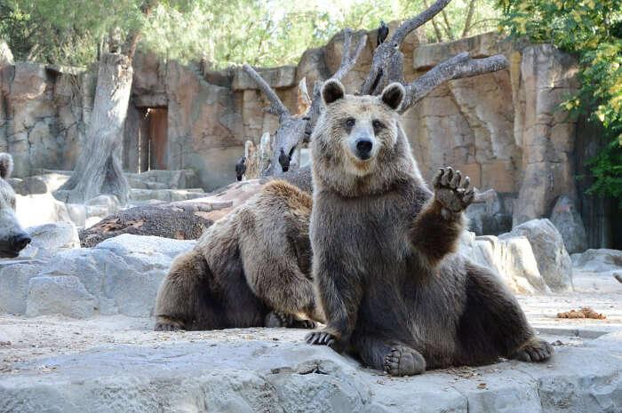The Bear Park