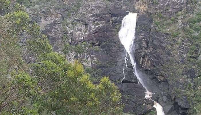 Tia Falls