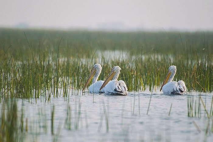 Bird sanctuary in Vadla