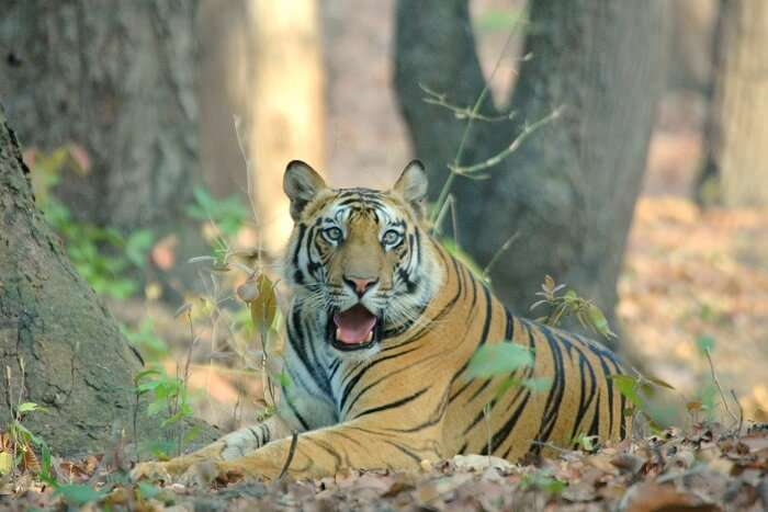 Visit Bandhavgarh Tiger Reserve in India