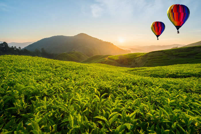Best Things To Do In Cameron Highlands