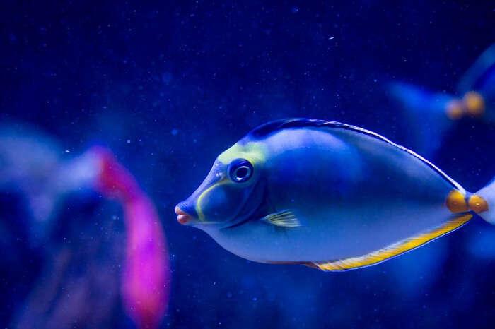 sea world acquarium