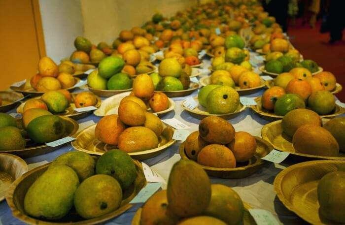 About International Mango Festival