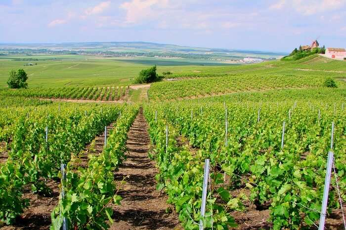 Ardenne vineyard near paris pfrance