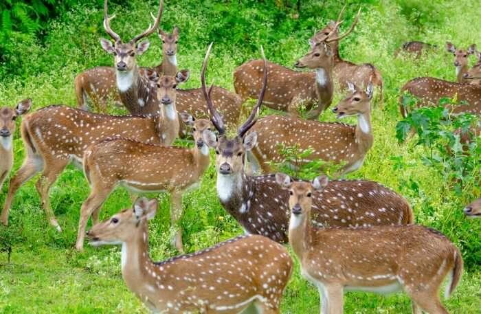 Bandipur National Park View
