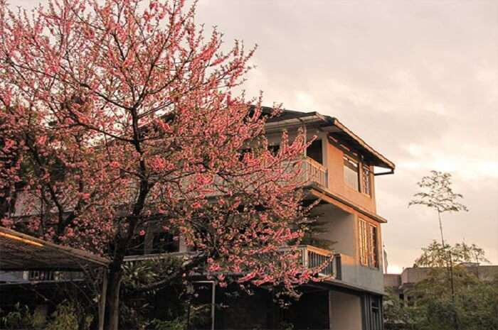 Cherry Guest House