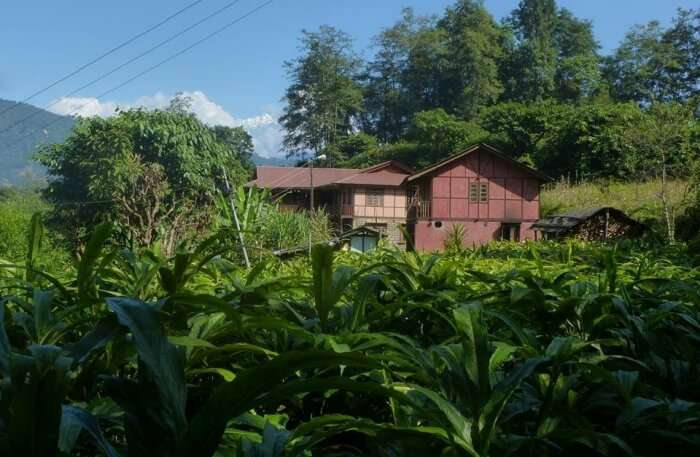 Dhungay Homestay In Gangtok