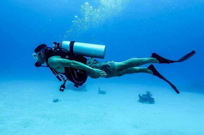 Watch The Underwater Life