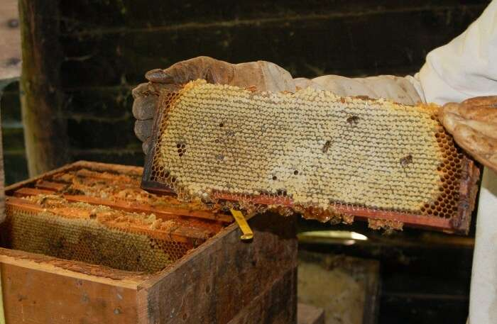 Honey Bees Centre in Saputara