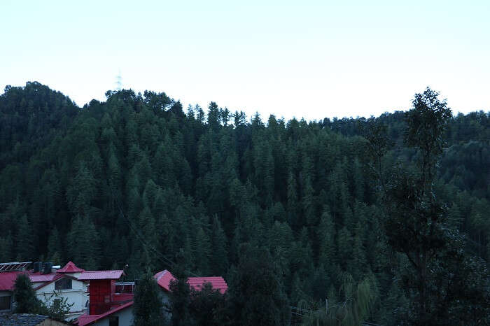 beautiful green valley of Shimla