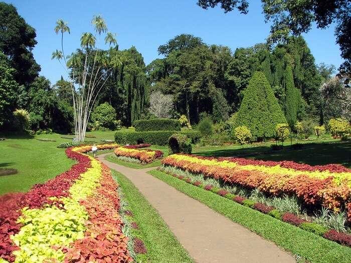 Botanical garden in Saputara