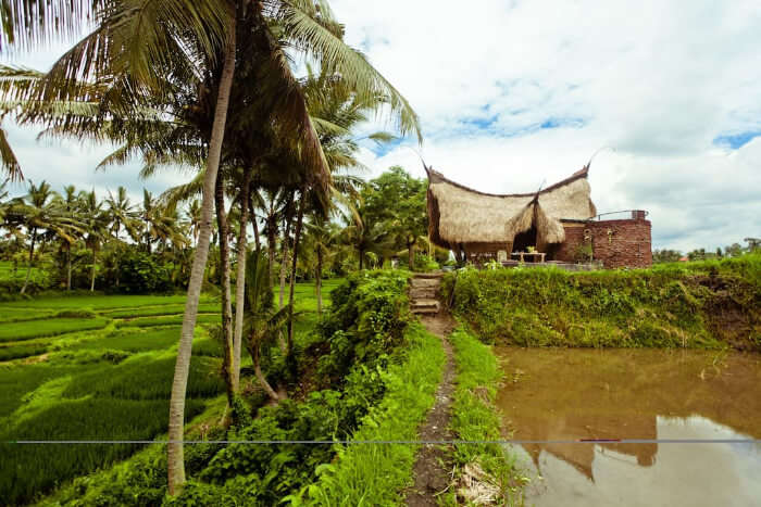 Bamboo Eco Cottage In Rice Field