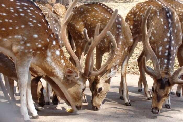India's biodiversity
