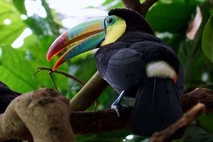 Eye-Pleasing Tropical Birds