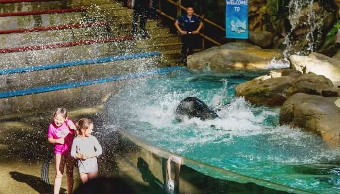 Fun Activities In The Singapore Zoo