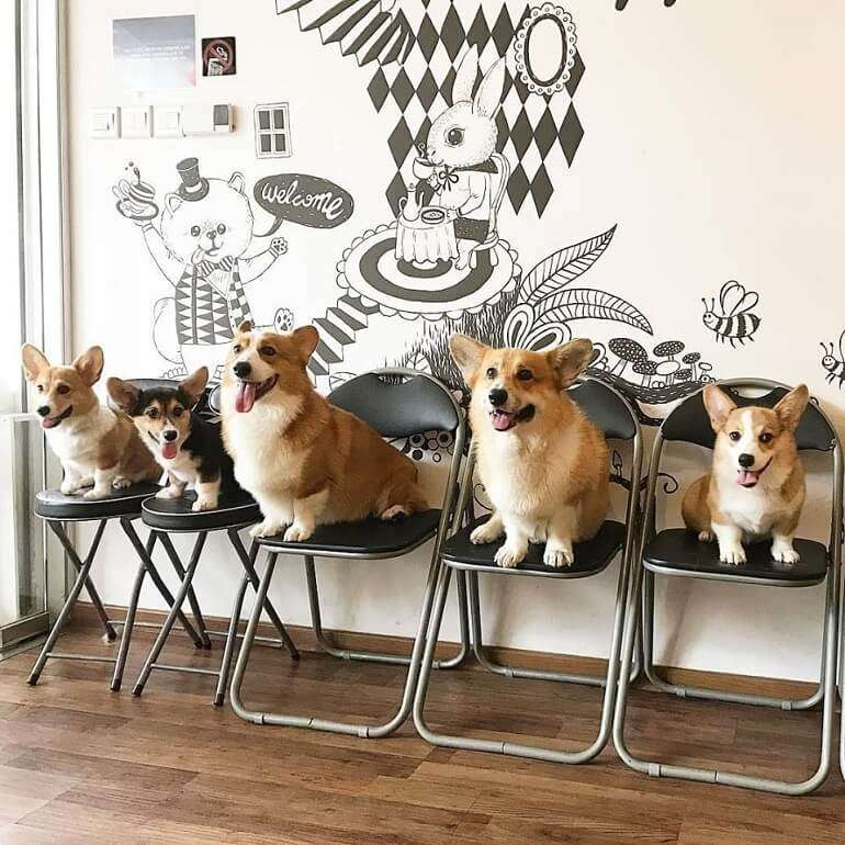 Dogs sitting in a cafe