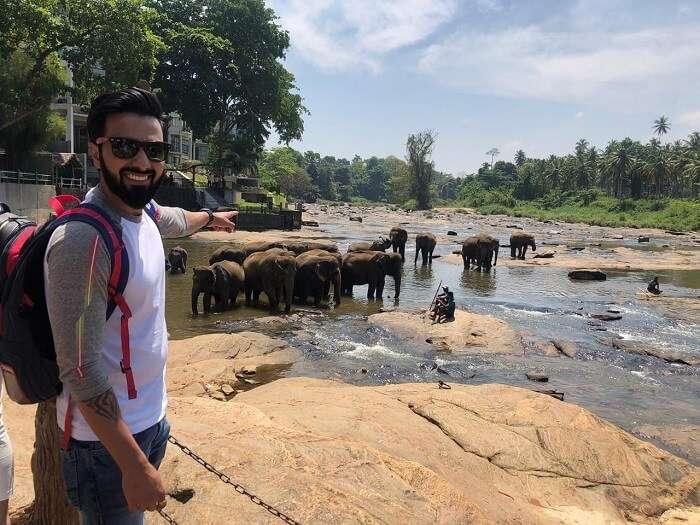 witness so many elephants