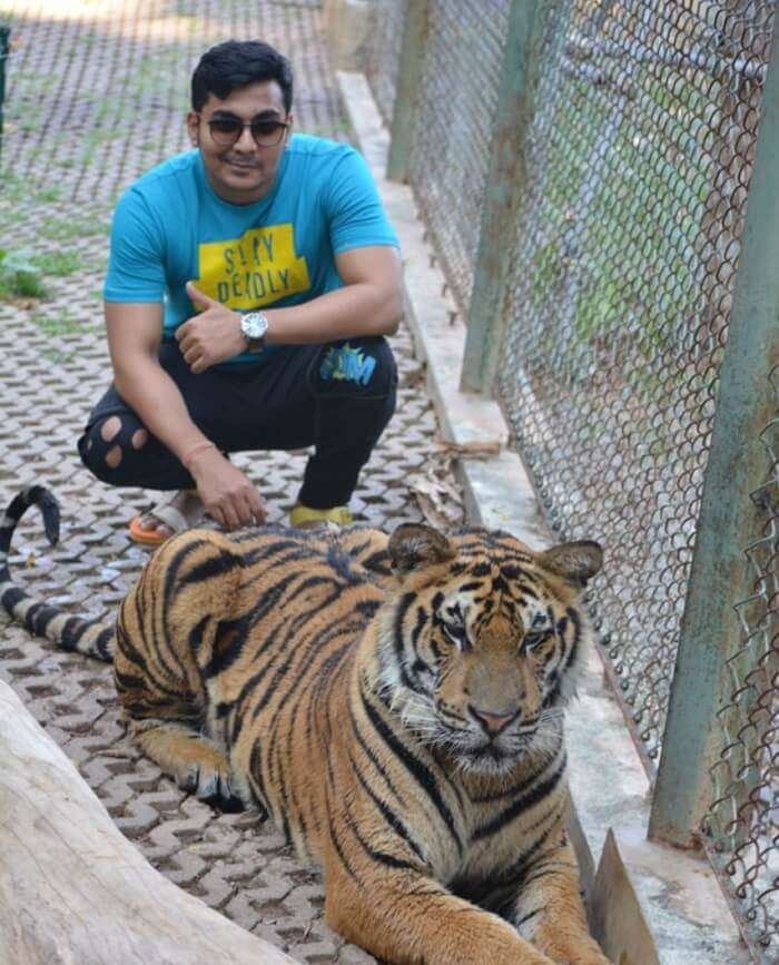 met with the tiger also