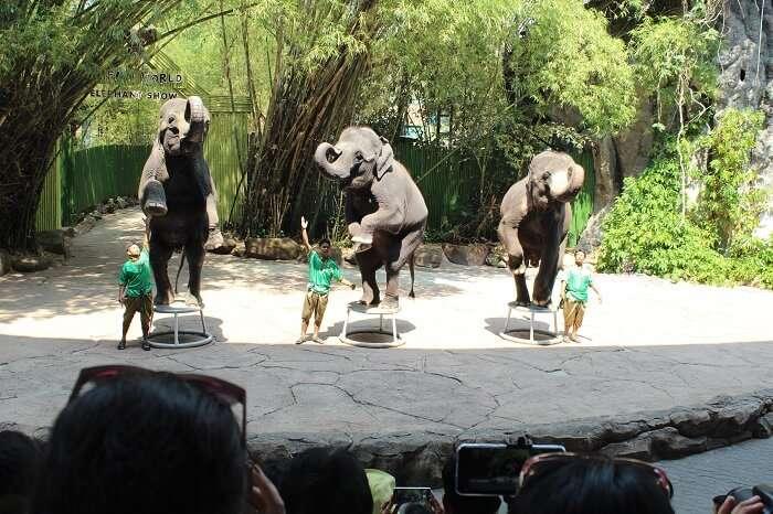 show in safari