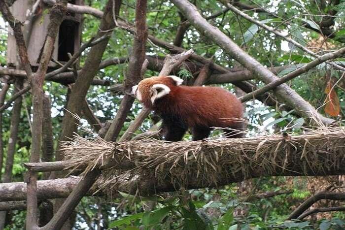 Padma Naidu Zoological Park