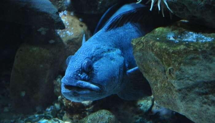 Sea Life Center