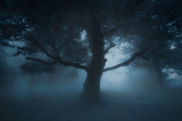 tree that is haunted
