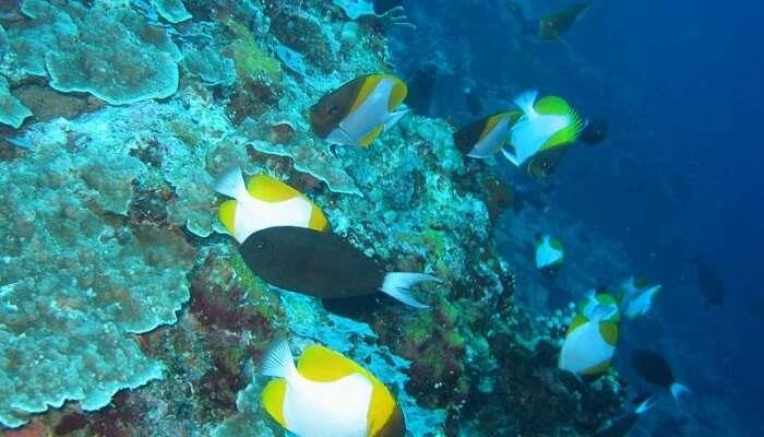 Apo Reef In Manila