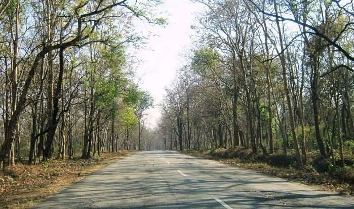 Bandipur Forest Reserve