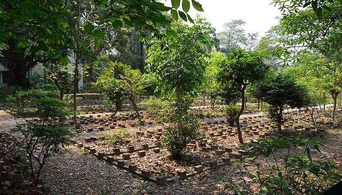 Baradari_Garden