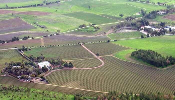 vineyards barossa