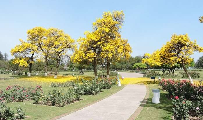 Best-Time-To-Visit-Chandigarh1