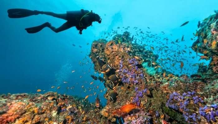 Superb Scuba Diving In Manila
