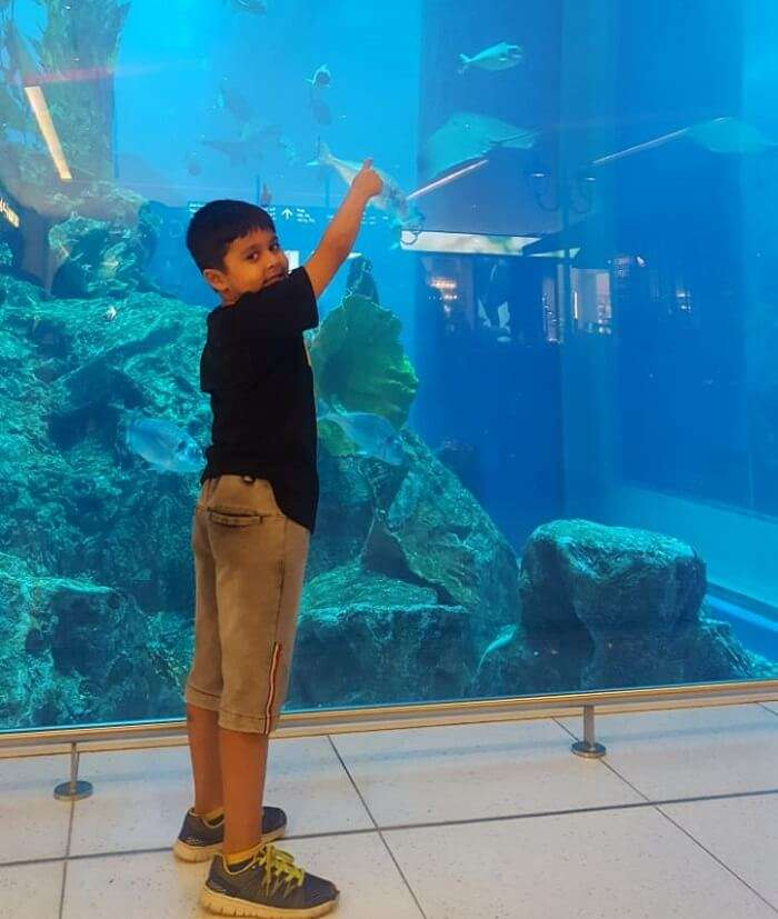 enjoyed watching marine life