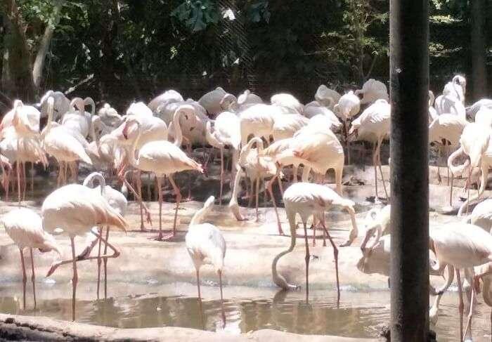 ostrich at Island