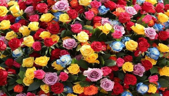 Jungnang Rose Festival