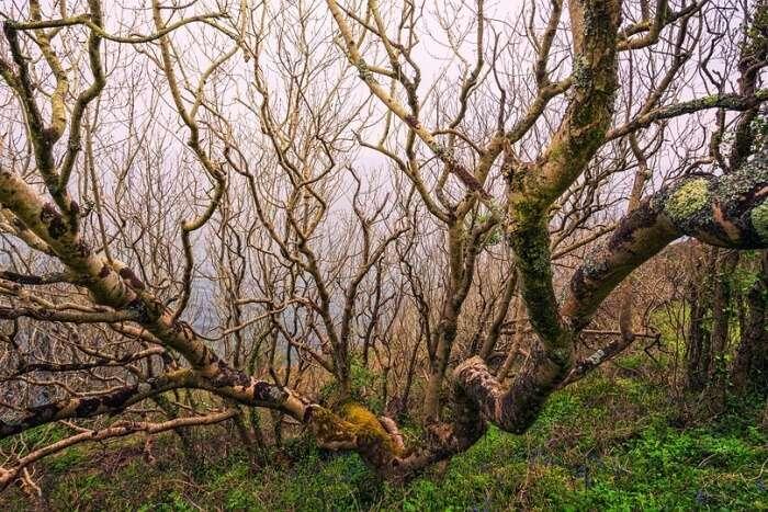 Mangalajodi Tree, Khordha