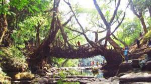 Mawlynnong Root Bridge